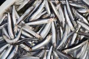 Ăn nhiều các loại cá này giúp tăng cường trí não và giảm mỡ máu kéo dài thanh xuân và tuổi thọ